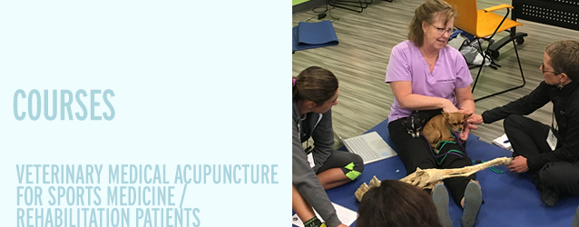 Veterinary Medical Acupuncture for Sports Medicine/Rehabilitation Patients