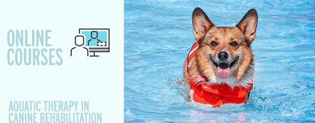 Aquatic Therapy in Canine Rehabilitation