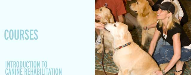 Introduction to Canine Rehabilitation
