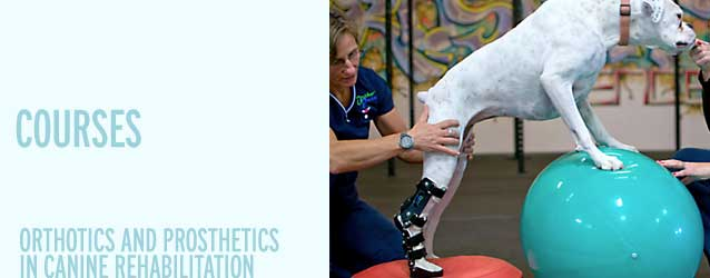 Orthotics and Prosthetics in Canine Rehabilitation