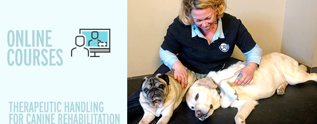 Therapeutic Handling for Canine Rehabilitation